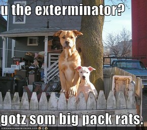 u the exterminator?  gotz som big pack rats.