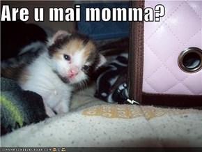 Are u mai momma?