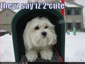 theyz say iz 2 cute