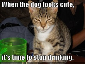 When the dog looks cute,   it's time to stop drinking.