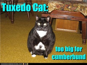 Tuxedo Cat: too big for cumberbund