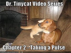 Dr. Tinycat Video Series  Chapter 2 - Taking a Pulse