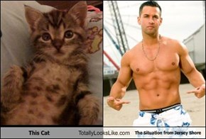 This Cat Totally Looks Like The Situation from Jersey Shore