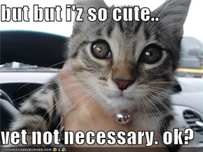 but but i'z so cute..  vet not necessary. ok?