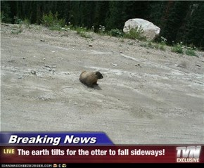 Breaking News - The earth tilts for the otter to fall sideways!