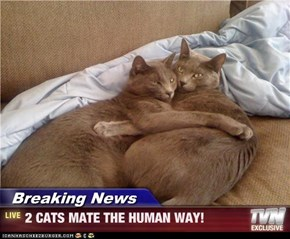 Breaking News - 2 CATS MATE THE HUMAN WAY!