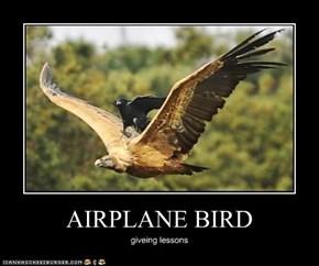 AIRPLANE BIRD