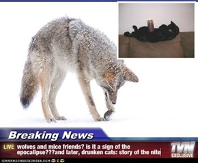 Breaking News - wolves and mice friends? is it a sign of the epocalipse???and later, drunken cats: story of the nite