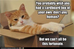 You probably wish you had a cardboard box of your own, don't you, human?     But we can't all be  this fortunate.