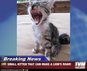 Breaking News - SMALL KITTEN THAT CAN MAKE A LION'S ROAR!