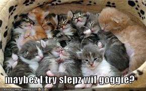 maybez I try slepz wif goggie?