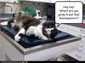 Hey hey! Where are you going to put that thermometer??