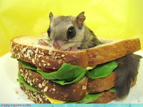 Squirrel SAMMICH!
