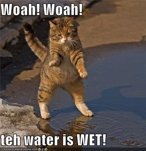 Woah! Woah!  teh water is WET!