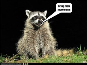 coon wants more