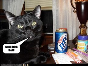 kitty drink that?