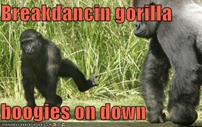 Breakdancin gorilla  boogies on down