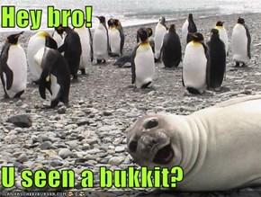 Hey bro!  U seen a bukkit?