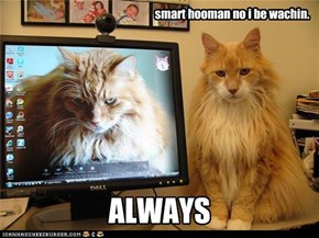 smart hooman no i be wachin.