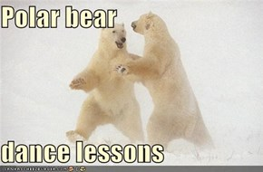 Polar bear   dance lessons