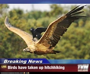 Breaking News - Birds have taken up hitchhiking