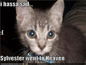 i hassa sad... :(                                                          Sylvester went to Heaven