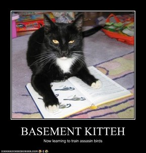 BASEMENT KITTEH