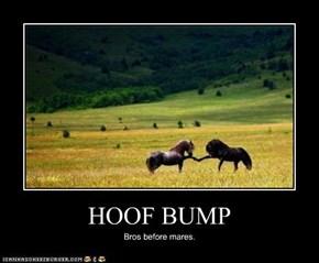HOOF BUMP