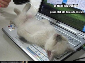 ur kitteh has crashed