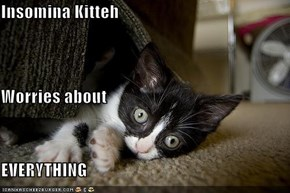 Insomina Kitteh Worries about EVERYTHING