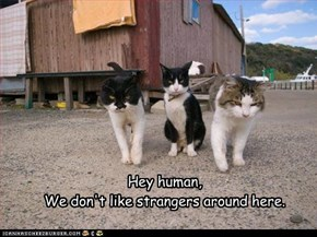 Hey human, We don't like strangers around here.