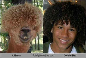 A Llama Totally Looks Like Corbin Bleu