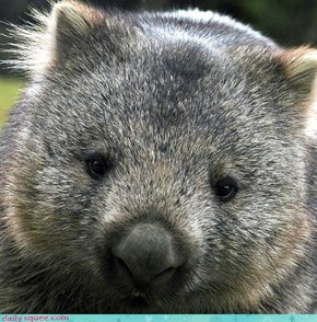 Wombat Just Wants a Hug