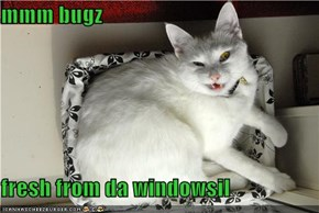 mmm bugz  fresh from da windowsil