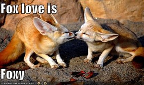 Fox love is  Foxy