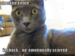 shocked kitteh...  iz shock... no, emotionally scarred..