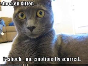shocked kitteh...  iz shock... no, emotionally scarred..