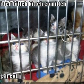 itteh bitteh kitteh comitteh  jail cell
