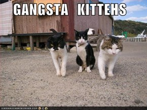 GANGSTA   KITTEHS