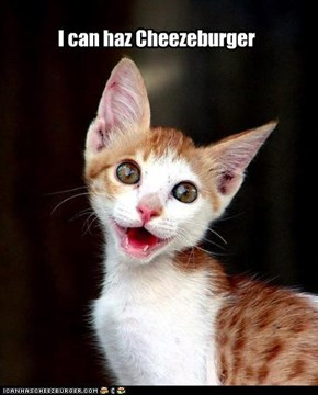 I can haz Cheezeburger
