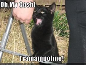 Oh My Gosh!  Tramampoline!