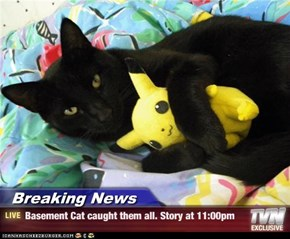 Breaking News - Basement Cat caught them all. Story at 11:00pm