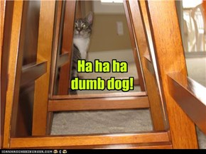 Ha ha ha dumb dog!