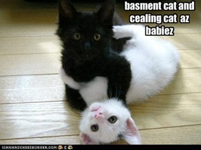 basment cat and cealing cat  az babiez