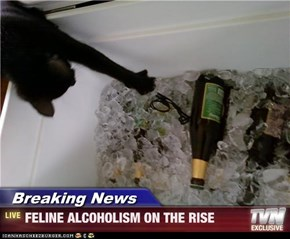 Breaking News - FELINE ALCOHOLISM ON THE RISE