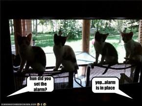 hun did you set the alarm?