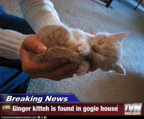 Breaking News - Ginger kitteh is found in gogie house