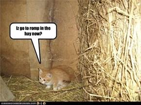 Iz go to romp in the hay now?
