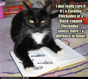 I dun really care if it'z a Carolina Chickadee or a Black-capped Chickadee...  unless there'z a diffrence in flavor.