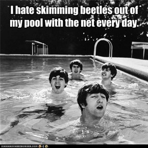 I hate skimming beetles out of my pool with the net every day.